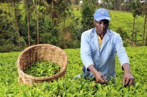 rural farming sub saharan africa