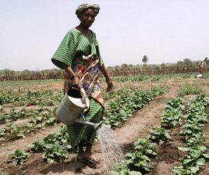 watering agriculture sub-saharan africa