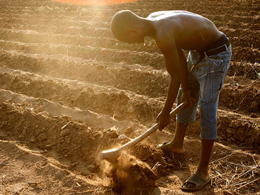 ICT Agriculture Africa